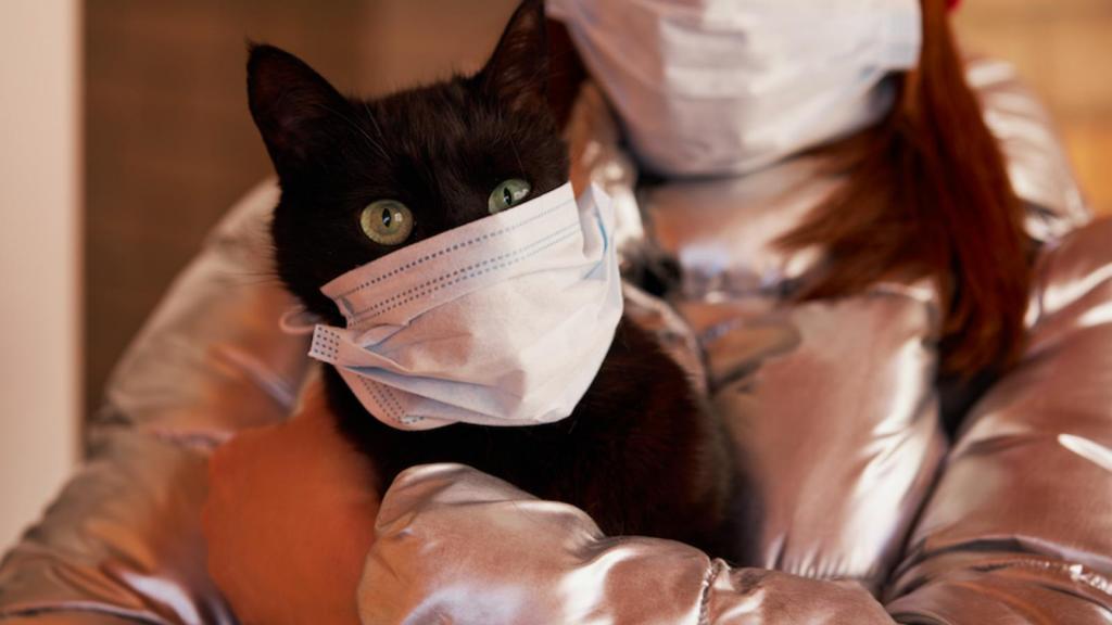 В России у кошки диагностировали коронавирус