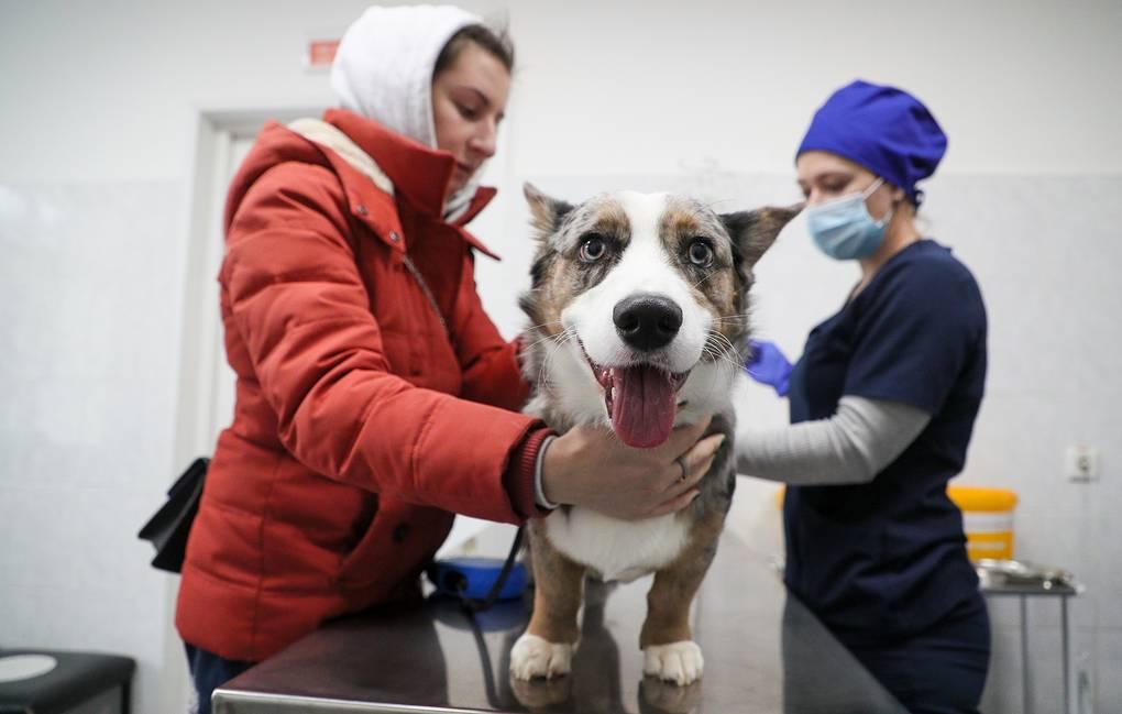 Россия зарегистрировала первую в мире вакцину от COVID-19 для животных