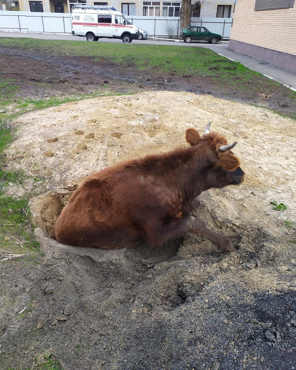 В Азове спасли корову, упавшую в колодец
