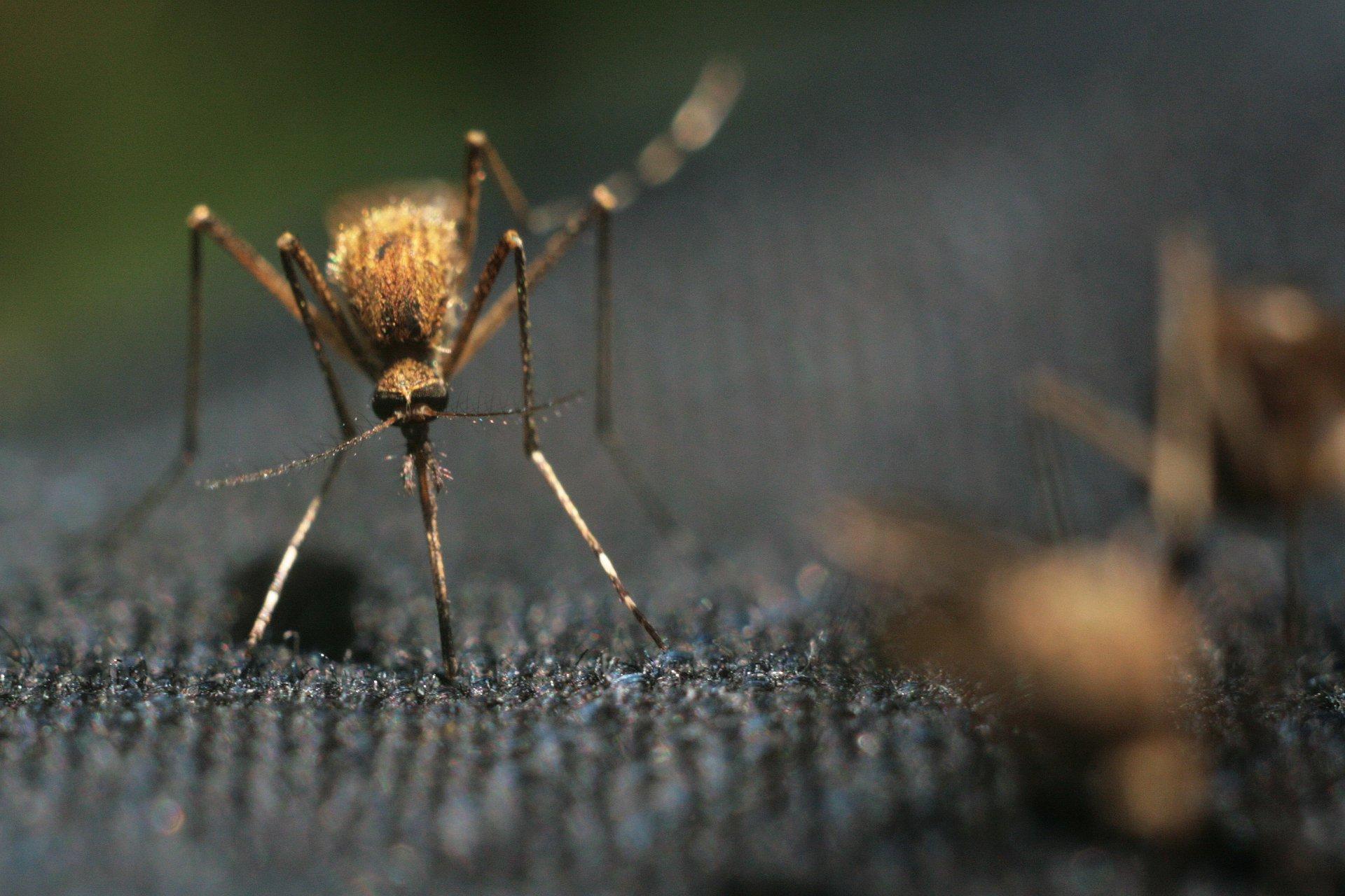 Россиян предупредили о надвигающейся первой волне комаров