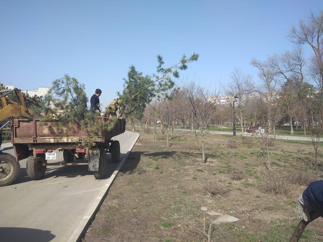 В Азове пройдет день древонасаждения