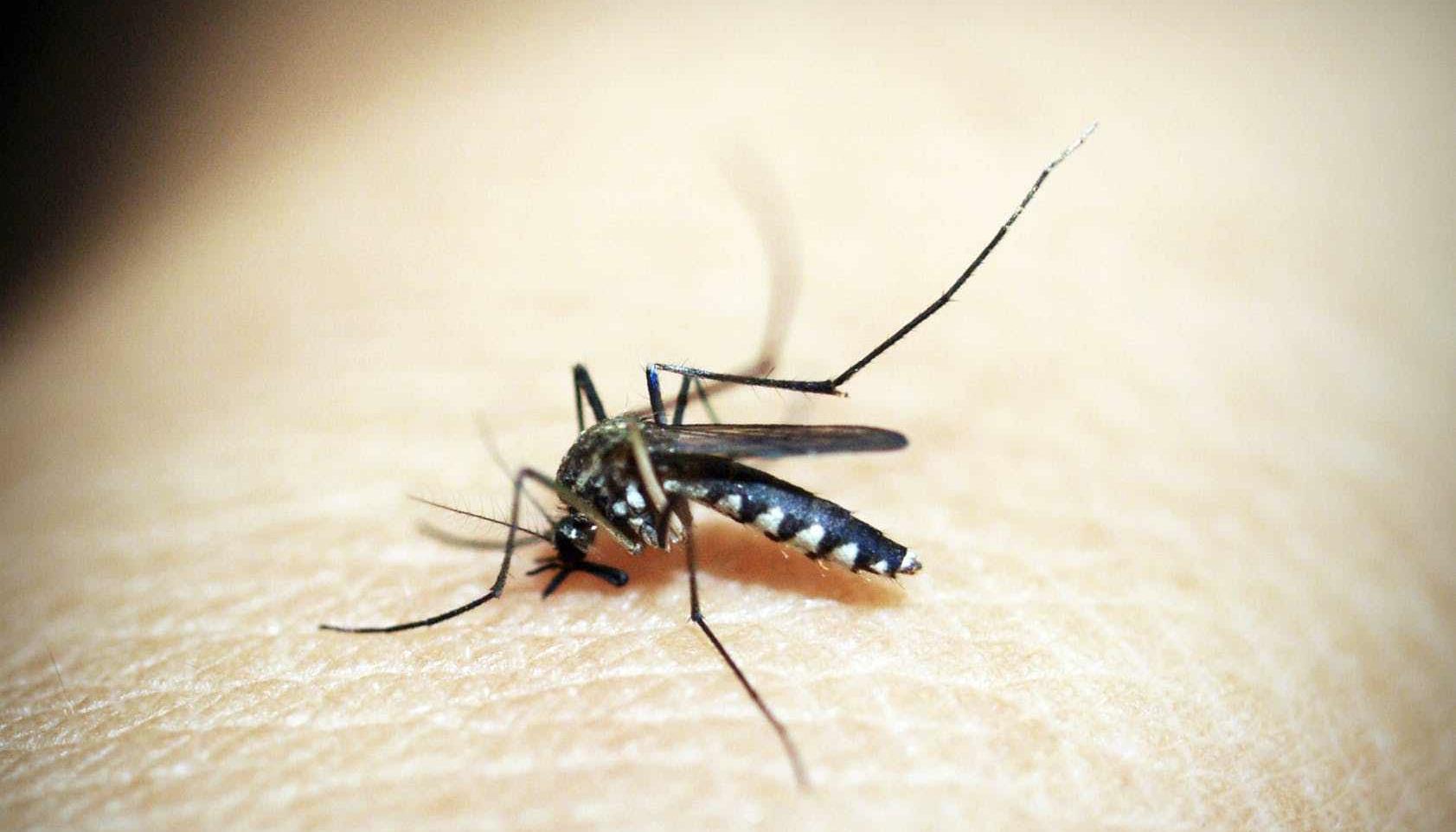 Аллерголог рассказала о вызывающих риск для здоровья укусах насекомых