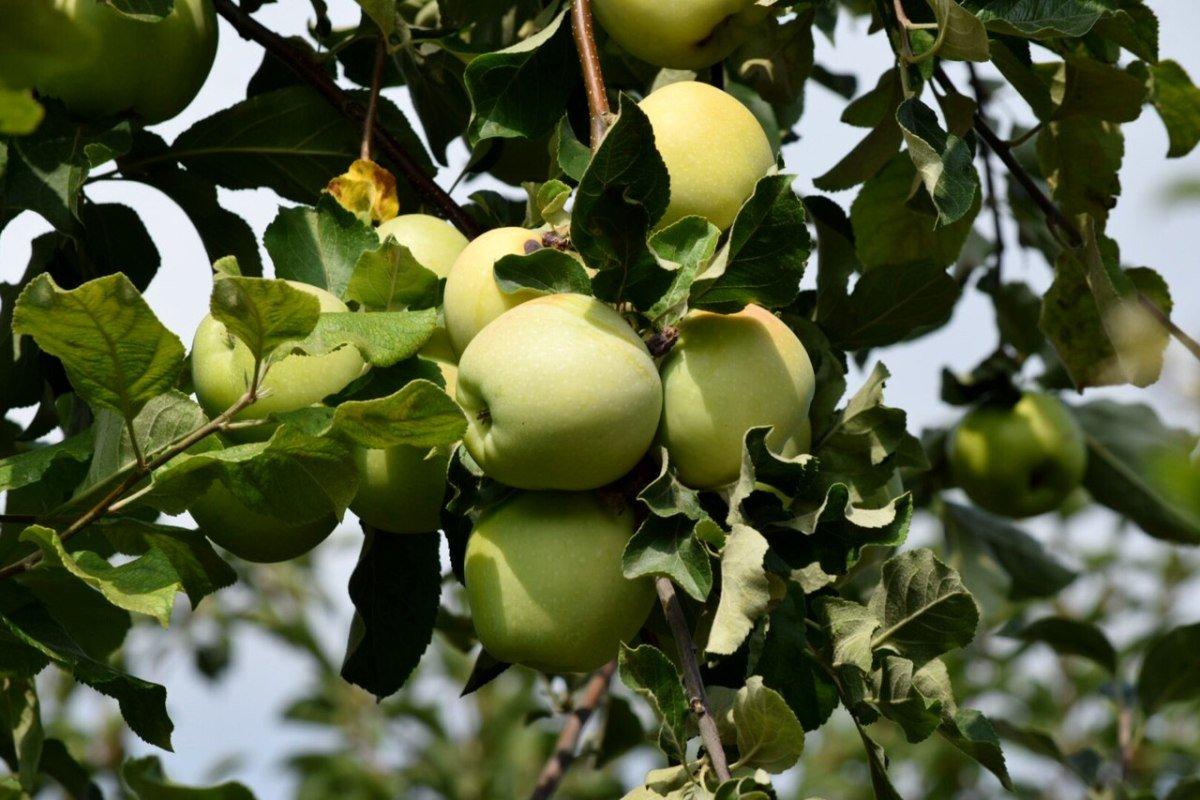 Эндокринолог рассказала, кому нельзя есть зеленые яблоки