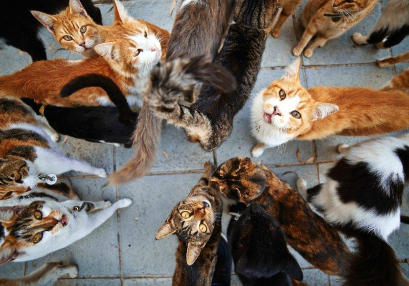Госдума планирует ограничить число кошек и собак в квартирах россиян