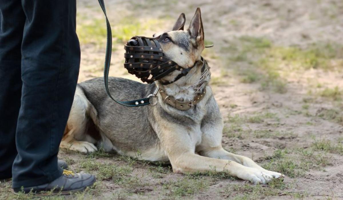 Юрист рассказала, за что могут оштрафовать владельцев собак