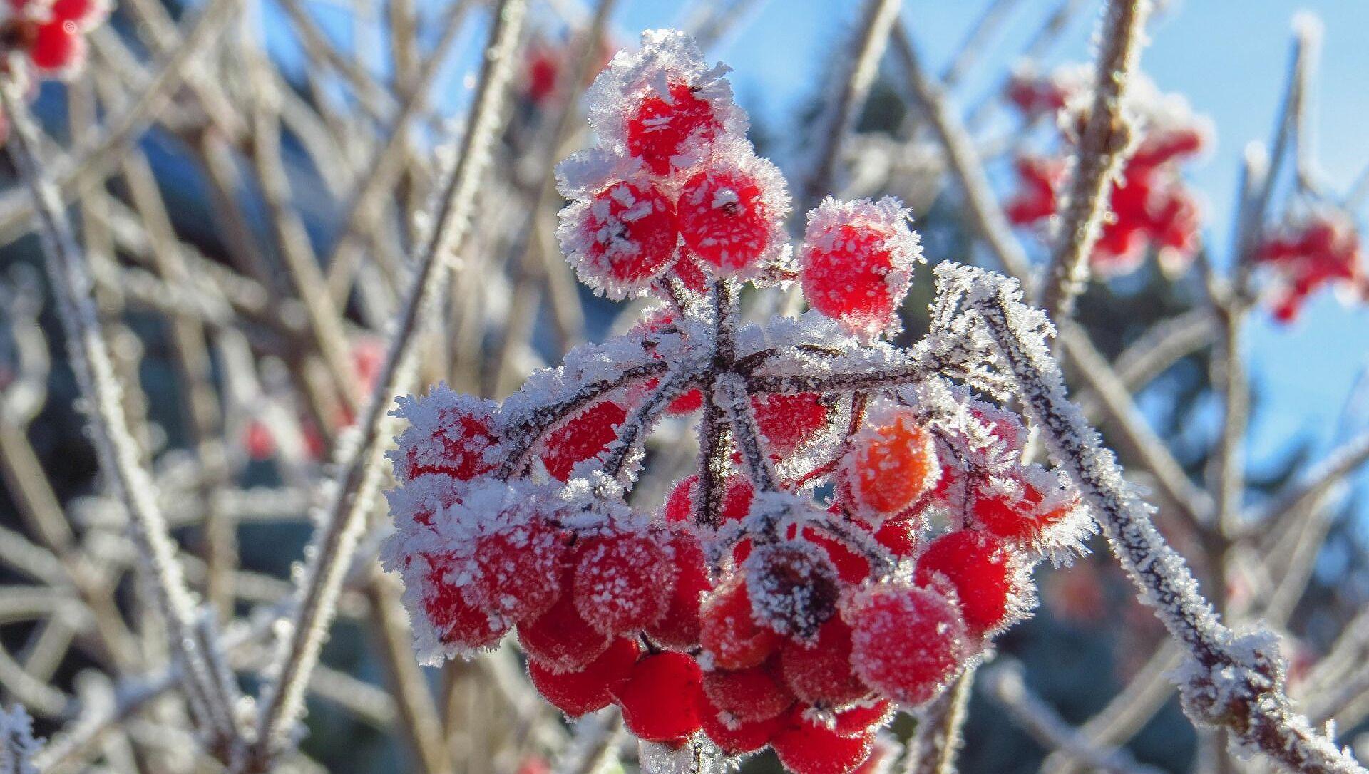 Штормовое предупреждение объявили в Ростовской области из-за заморозков