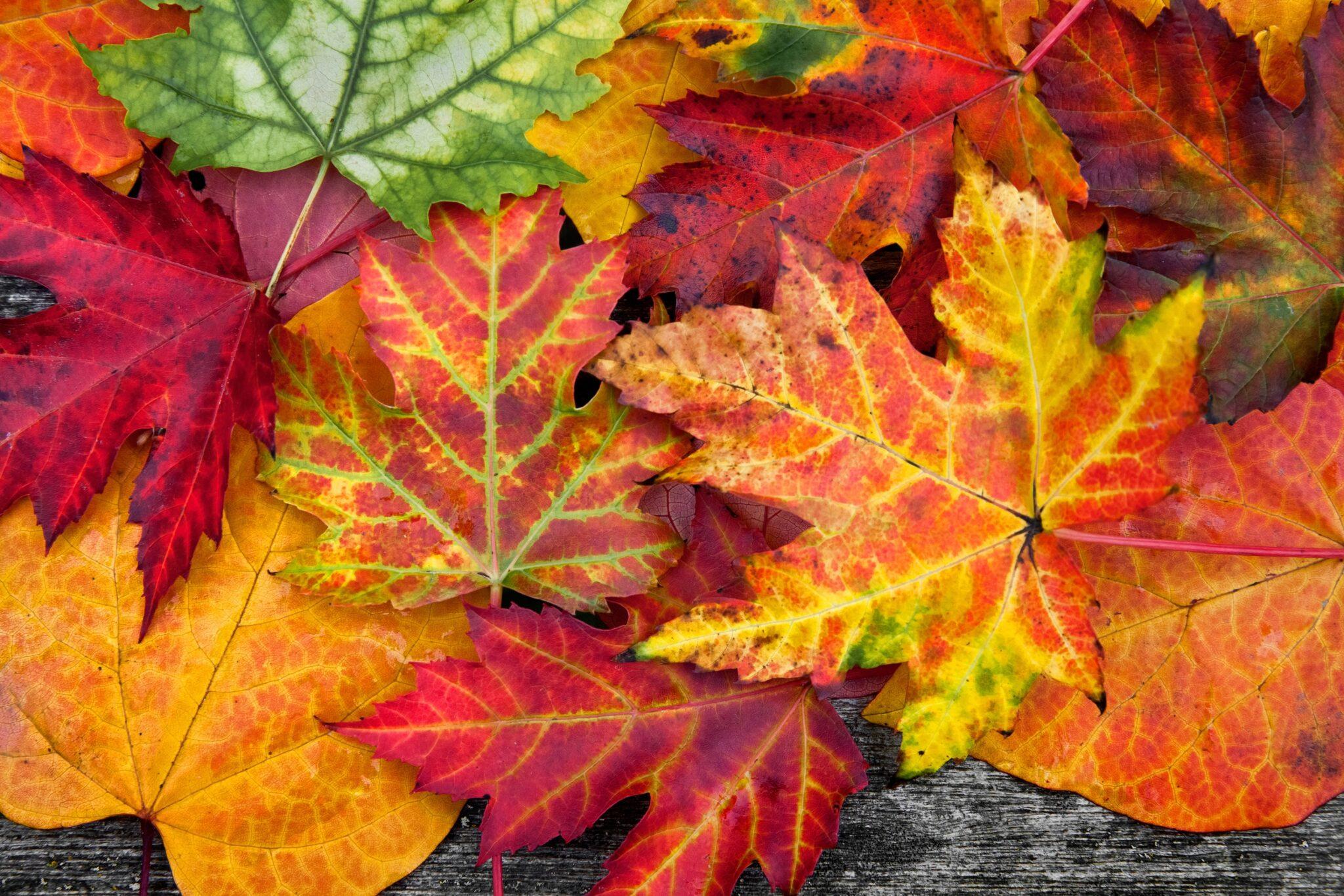 Иммунолог предупредил об опасности опавшей листвы для аллергиков