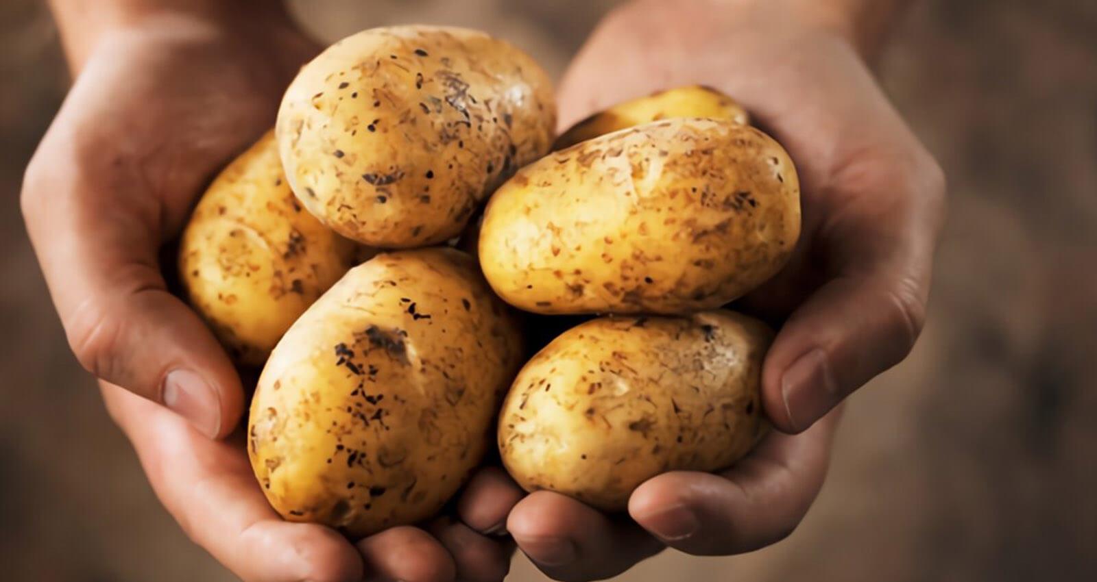 Донской Минсельхоз объяснил осенний взлет цен на картофель